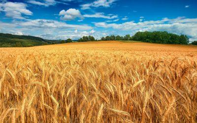 Farina del tuo sacco – l'innovazione che fa bene al territorio